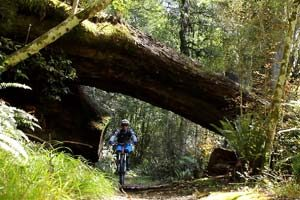 Tree Trunk Gorge Ride